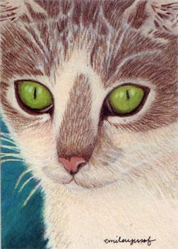 greeneyedcat.jpg