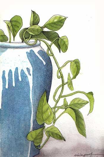 Images Of Money Plant. Moleskine: moneyplant