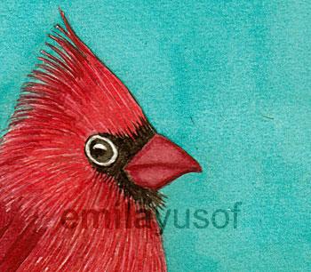 close-up cardinal