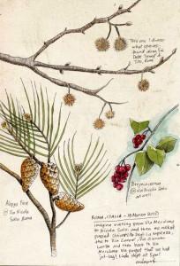 plants of roma