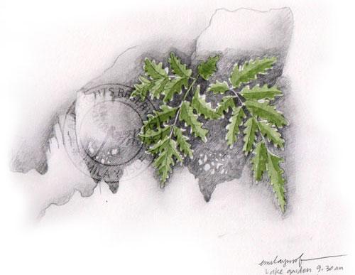 fern on palm tree