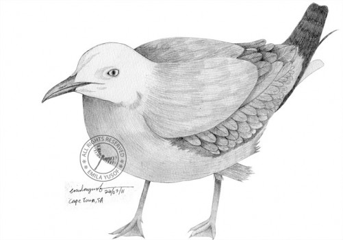 seagull sketch