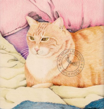 Color Pencil Cat