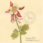 drawing-flower3
