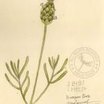 drawingflower2
