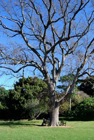 me under oak tree