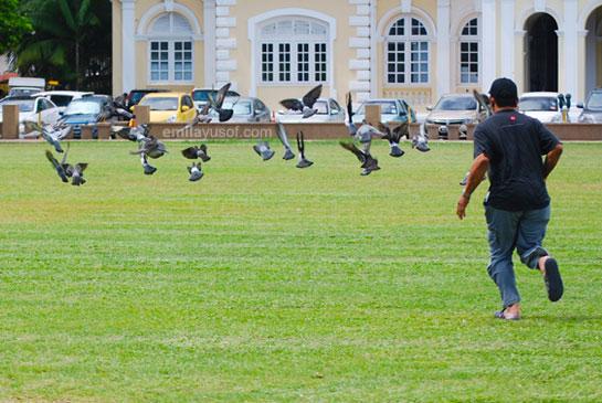 husband chasing bird