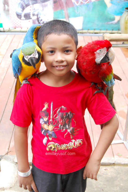 yassin-and-parrots