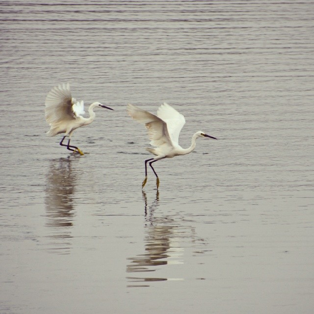 Egrets, I saw a few.