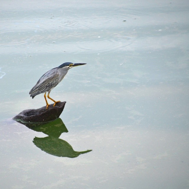 A heron standing by to catch fish