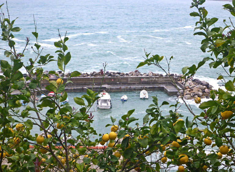 Vernazza from top, amidst lemon trees.